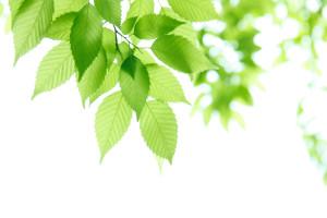 bg_seminar_leaf